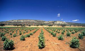 la-mancha-vineyard-009