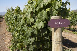 malbec-wine-guide-argentina