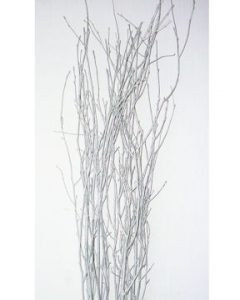 silver-painted-birch_med