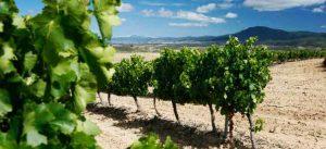 wine_regions_spain
